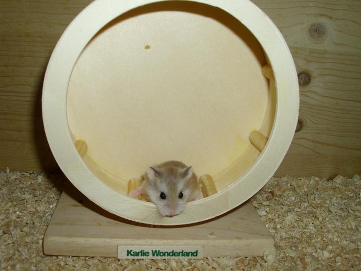 Laufrad für Zwerghamster oder kleine Hamster