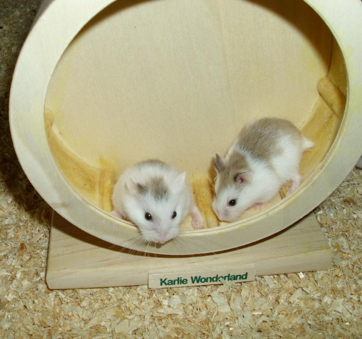 Hamsterrad aus Holz, Laufrad für Zwerghamster