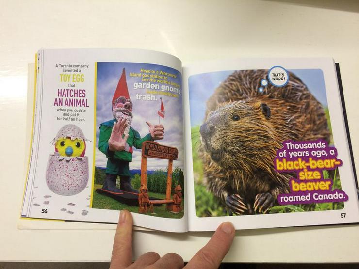 """Bild 3: NEUWERTIG Buch """"Weird but true! (Seltsam/Schräg aber wahr!)"""""""