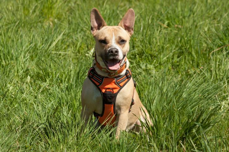 Miss Amy (Tierhilfe Franken) - Mischlingshunde - Bild 1