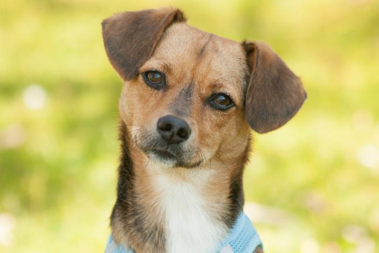 Boba (Tierhilfe Franken) - Mischlingshunde - Bild 1