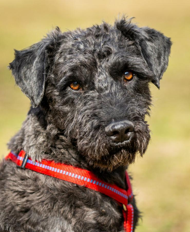 Rodin (Tierhilfe Franken) - Mischlingshunde - Bild 1