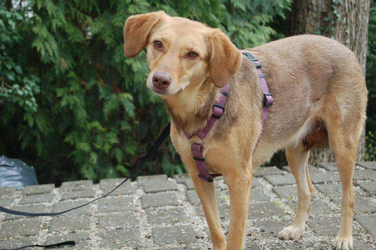 Fräulein Flocke (Tierhilfe Franken) - Mischlingshunde - Bild 1