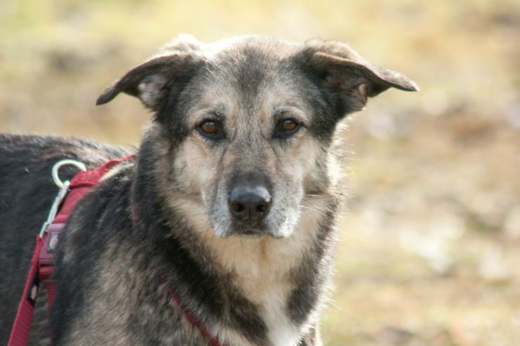 Moffy (Tierhilfe Franken) - Mischlingshunde - Bild 1