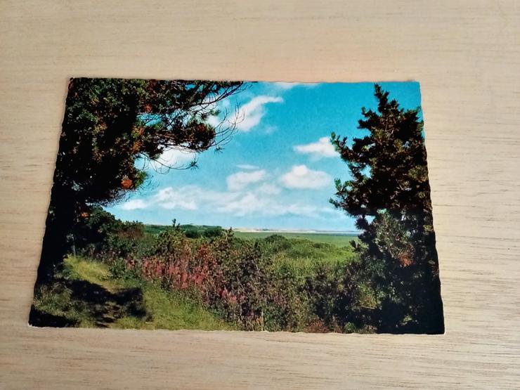 Postkarte 286-435. Insel Sylt. Blidselbucht.