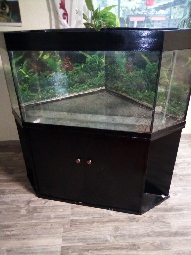 Eck-Aquarium 170 liter abzugeben