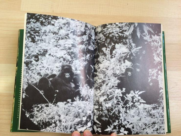 Bild 9: Buch Gorillas im Nebel v. Dian Fossey