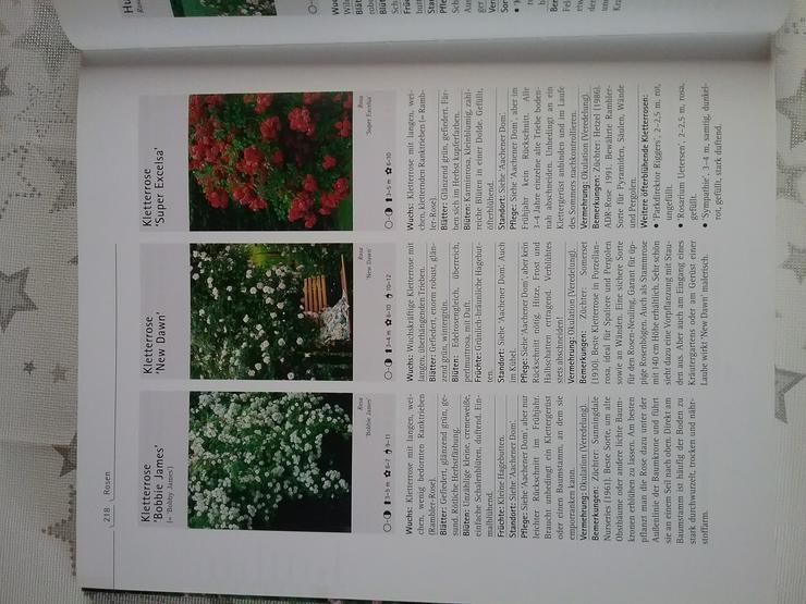 Bild 3: Gartenpflanzen