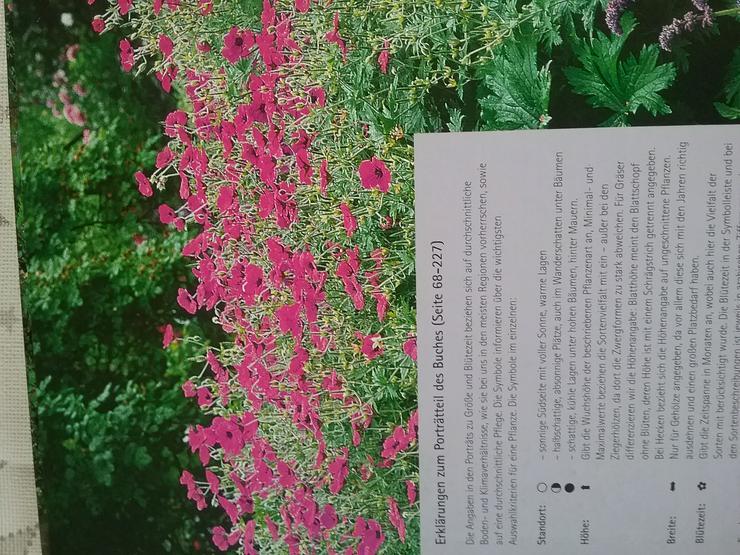 Bild 4: Gartenpflanzen