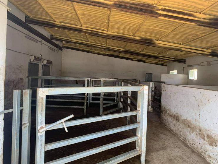 Schlachthof in Ungarn zu Verkaufen - Gewerbeimmobilie kaufen - Bild 4