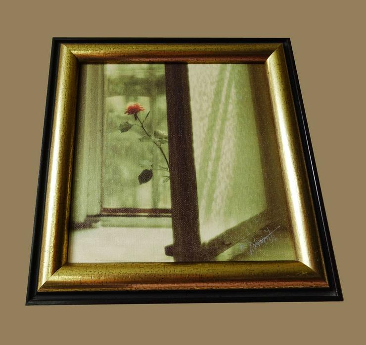Anvo Rose im Fenster Im Rahmen