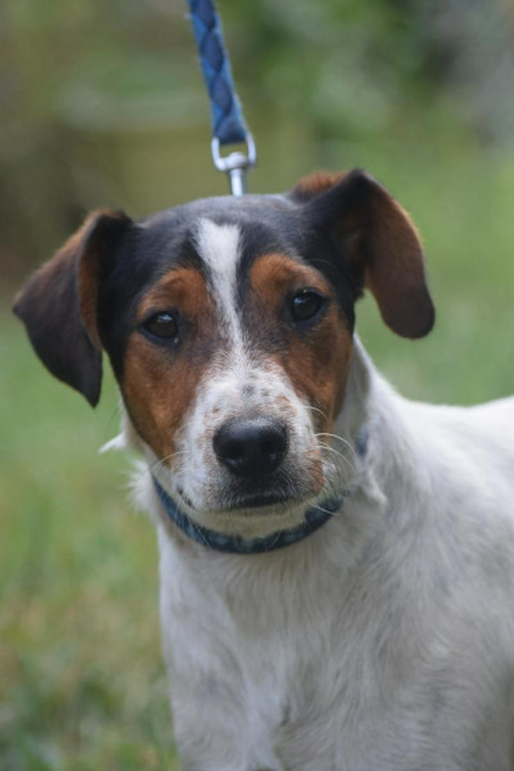 Monokini ist ein netter und sehr aktiver Junghund