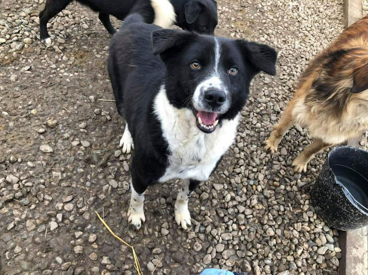 NOTFALL - Lennox sucht liebevolles Zuhause - Mischlingshunde - Bild 1
