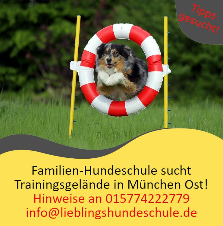 Hundeschule sucht Trainingsgelände (Wiese oder Betonplatz) in München Ost