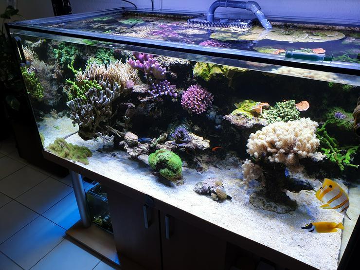 Meerwasseraquarium komplett mit Ableger Becken,Technik und Besatz
