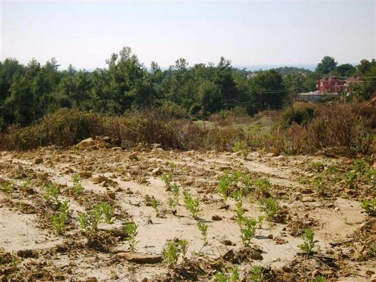 Bild 2: 667 qm Baugrundstück in Alanya Avsallar mit TOP Panorama