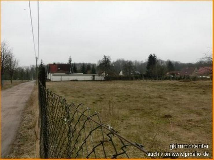 Bild 3: Landschaftsblick Richtung Teich über die Felder..... hier soll mein ZUHAUSE sein...