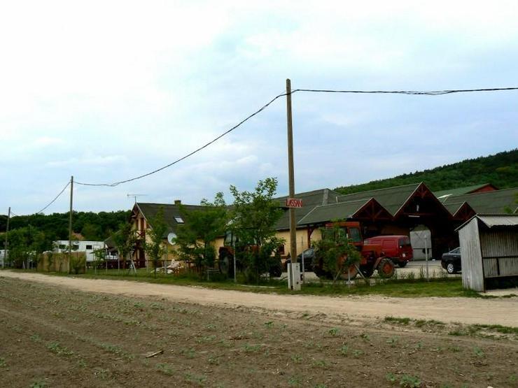 Gut eingeführten Reiterhof in Ungarn- 30km westlich von Budapest